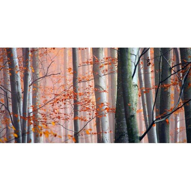 Close Autumn