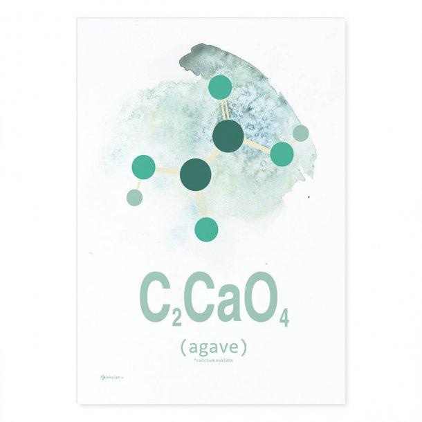 Agave - Aqua