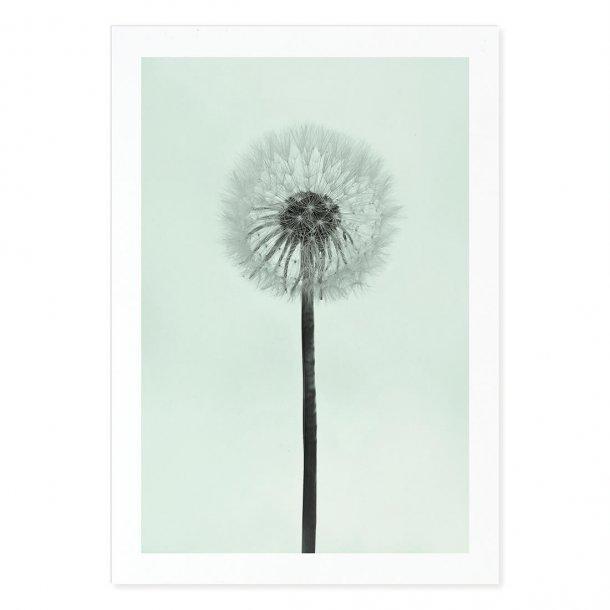 49 Dandelion