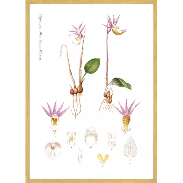 Flora Danica 15