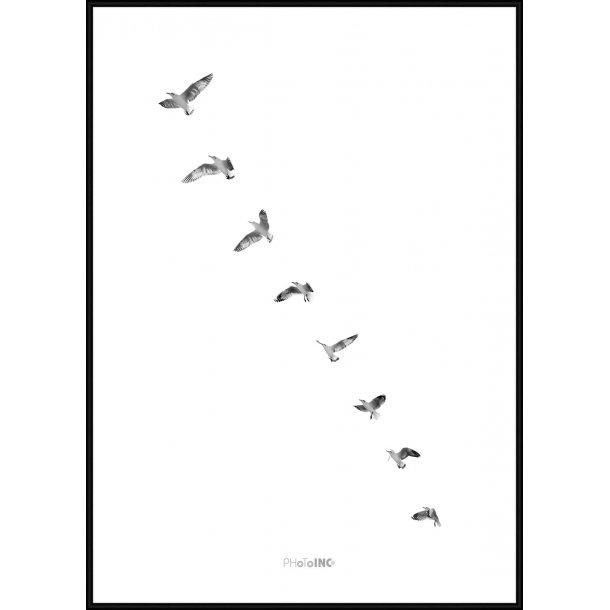 Birds Takeoff