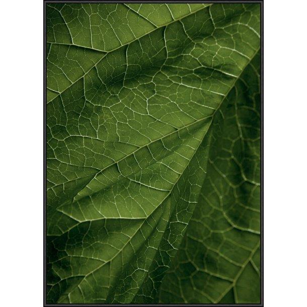 17 Leaf Gold