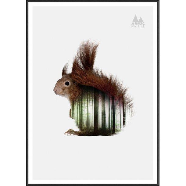 Clean Nature - Squirrel